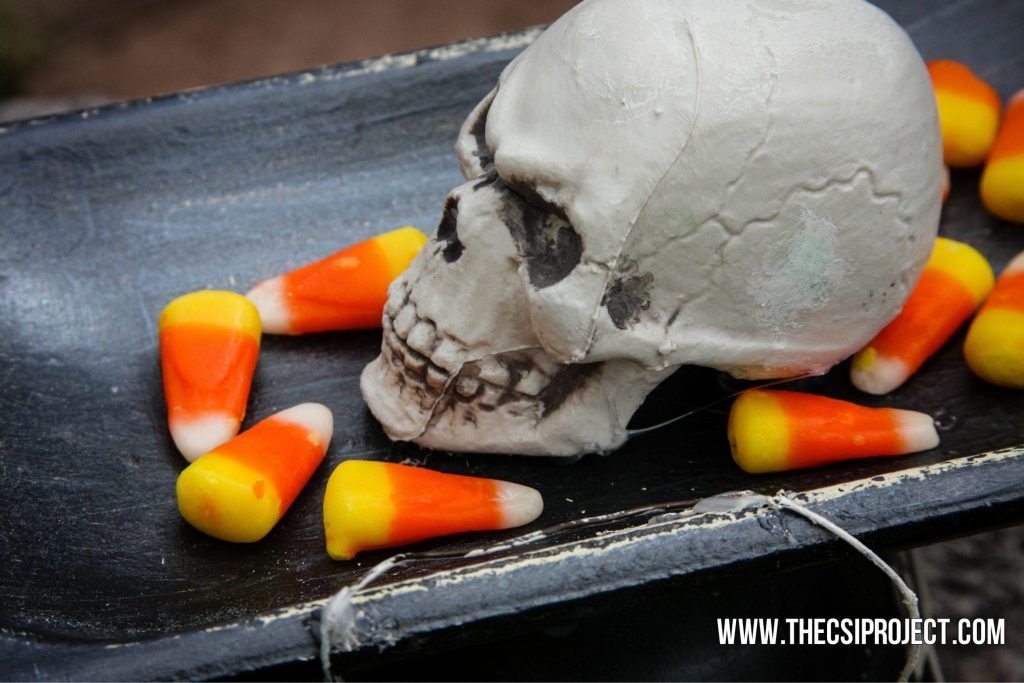 skull candy dish5
